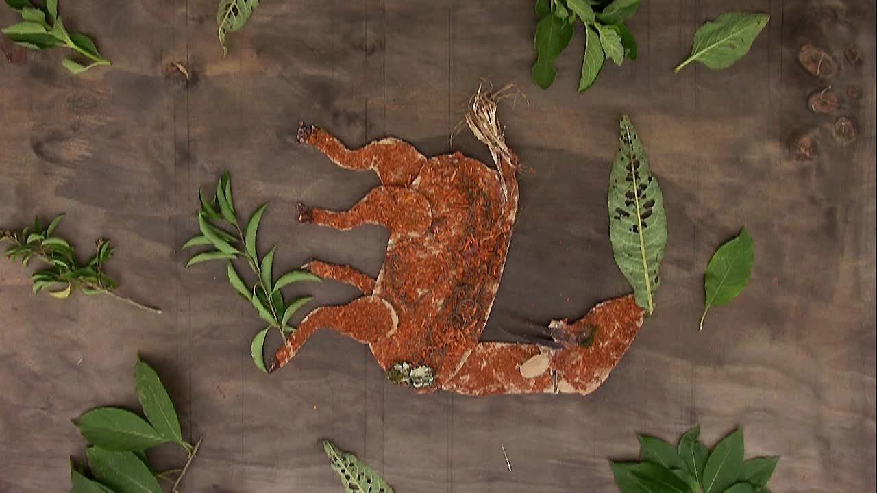 Ogiek-Still-falling-bushbuck